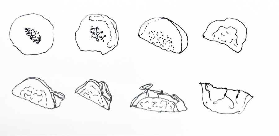 Chinese Dumpling Drawing Untitled